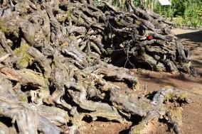 Dragon en bois flotté dans le jardin La vallée de Troy réalisé par Tiene Vanly