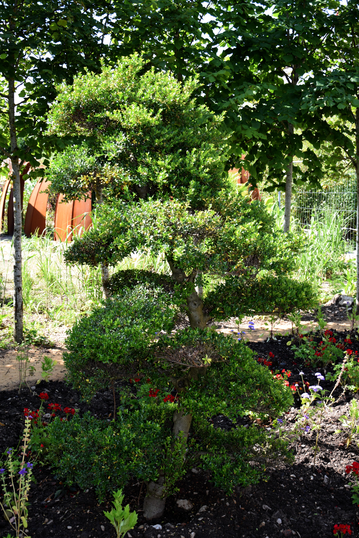 Quand Et Comment Tailler Un Houx niwaki – arbre de jardin | festival des jardins