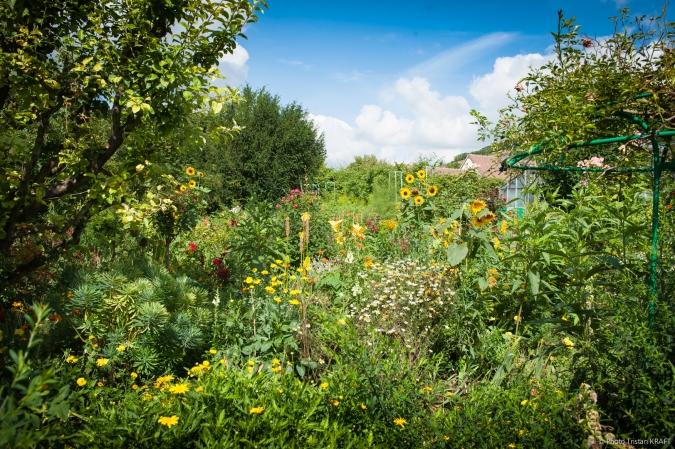 Jardin de Givergny - Claude_Monnet-11.jpg