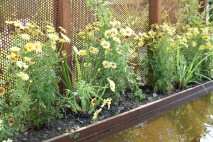Détail des fleurs du jardin Entre deux rives