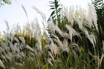 Entre les jardins La couleur de l'air et Passage