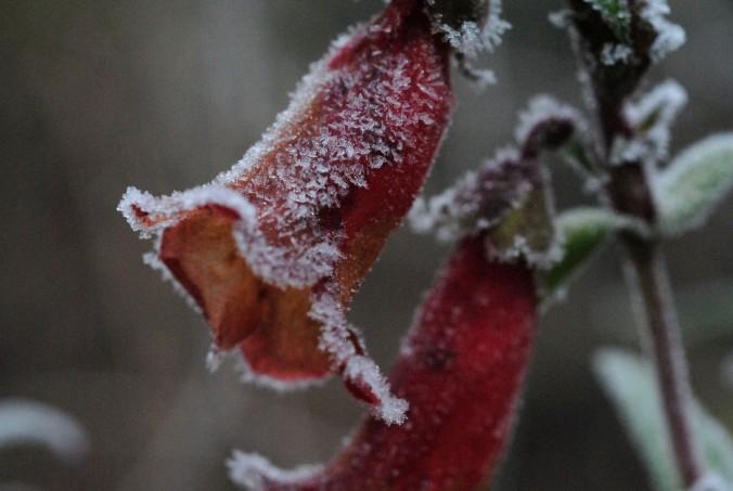 Jardins d hiver festival des jardins - Jardins dhiver com ...