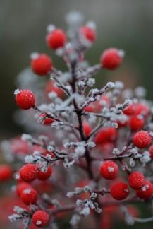 Jardins d'hiver