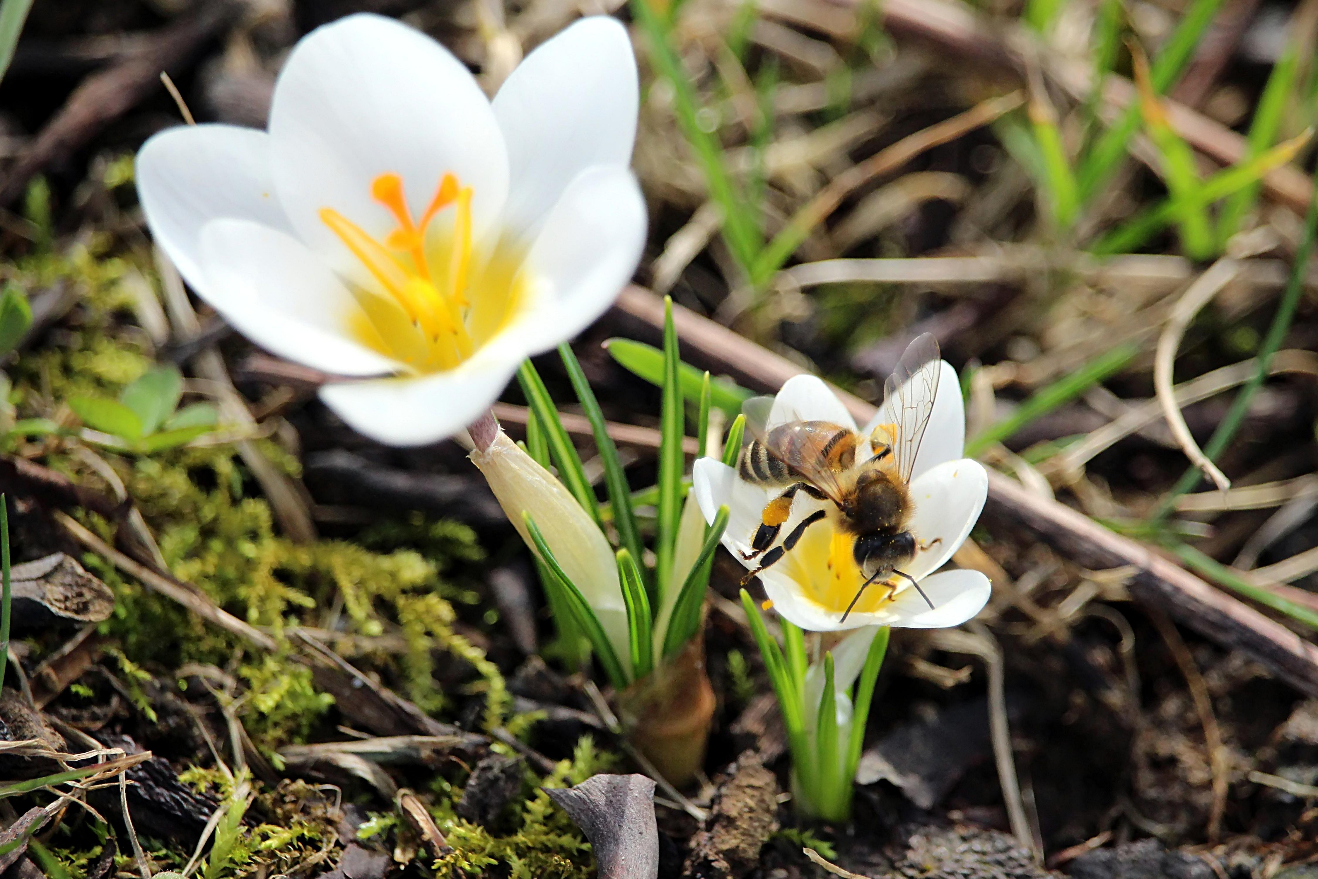 abeille2_filtered_recadr